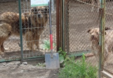 Schronisko dla zwierząt apeluje - czworonogi Was potrzebują