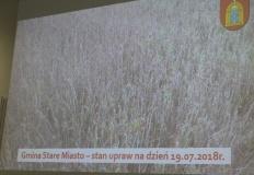Stare Miasto. Gmina apeluje o szybką pomoc dla rolników po suszy