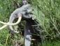 Gosławice. Wybierzcie i zagłosujcie na imię dla słonia leśnego!
