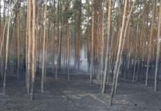 Pożar lasu w Ruminie. Na m ...