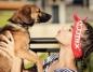Tancerze ze Studia Tańca Rytmix zachęcają do adopcji zwierząt