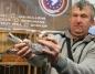 Kazimierscy hodowcy pojechali na Olimpiadę Gołębi Pocztowych