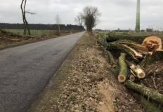 Wytną drzewa przy drodze. ZDP zamierza usunąć około 300 sztuk