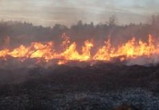 Pożary traw w powiecie konińskim. Prawdopodobne podpalenia