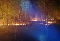 Pożar w Bilczewie. Płonęła sucha trawa, poszycie leśne i drzewa