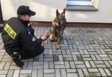 Kościelec. Policyjny pies wytropił złodziei i zaprowadził do nich