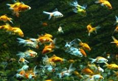 Jakie akwarium kupić dla rybek?