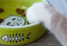 Masz kota? Sprawdź jaka karma dla kota jest dla niego lepsza: sucha czy mokra?