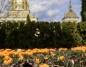 Pole krokusów, czyli zapowiedź wiosny przed licheńską bazyliką