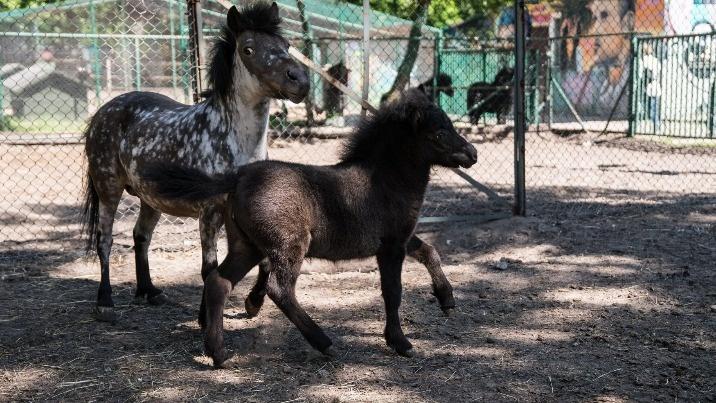 Maluchy na wybiegu. W konińskim małym zoo 9 młodych zwierząt