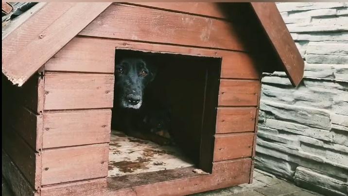 Nie pozostali obojętni wobec skrzywdzonych psów z Radys