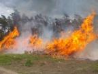 Pożar w Daninowie. Wójt gminy Kazimierz Biskupi wyznaczył nagrodę za informacje o podpalaczu