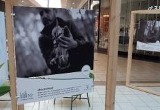 Stare Miasto. Wystawa zdjęć z okazji 100-lecia Lasów Państwowych