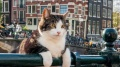 Świat według kota (Wersja: napisy)