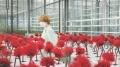 Kwiat szczęścia