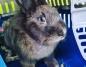 Gmina Kramsk. Zaginął królik. Szuka go zrozpaczona właścicielka