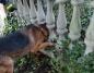Konin. Pies utknął w ogrodzeniu. Zwierzęciu pomogli strażacy