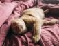 Wybór legowiska dla kota ma znaczenie - wybierz odpowiednie!