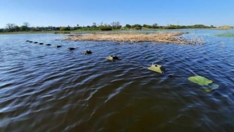 Szczepidło. Z Warty zniknęły platformy lęgowe dla rybitwy czarnej
