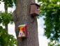 Artystyczne ptasie budki to dzieło uczniów Plastyka w Kościelcu