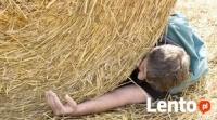 ypadek w rolnictwie, zatrucia środkami chemicznymi czy