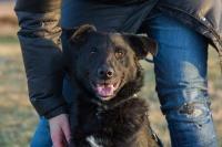 Karolek, idealny pies - młody, grzeczny i przyjazny, pokocha