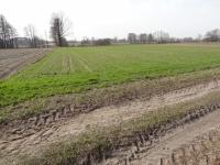Grunt rolny 1,54 ha Bukowe gm. Zagórów, pow. Słupca