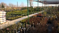 Centrum Ogrodnicze OGROD MARZEN Roztoka 13