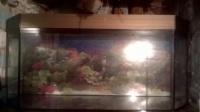 Akwarium 240l