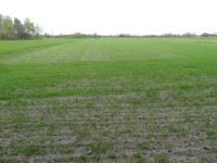 Grunt rolny 1,43 ha
