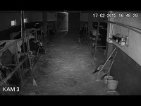 Monitoring kamery w oborze, przyczepa, rozrzutnik bizon ciąg