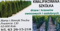 Szkółka drzew i krzewów owocowych - M. H. Trocha