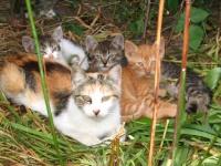 Kotki poszukują domu!