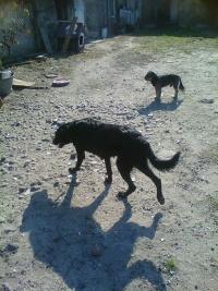 psy do nabycia w dobre ręce