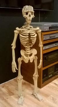 drewniany szkielet człowieka - puzzle 3D