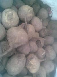Sprzedam ziemniak paszowy