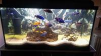 Akwarium 200 L Pyszczaki