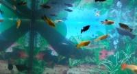życie do akwarium