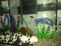 Akwarium kompletne z rybami
