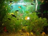 zestaw ryb do akwarium