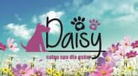 DAISY Salon SPA dla psów zaprasza