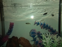 Akwarium 30 litrów z rybami