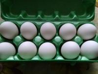 Świeże jaja