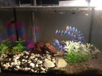 Akwarium z rybkami