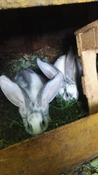 króliki!!!!!!!
