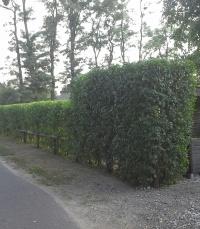 Prace ogrodniczo-porządkowe