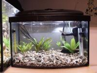 Akwarium 25l z wyposażeniem