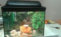 Sprzedam Akwarium z Pokrywą z Oświetleniem Kompletne