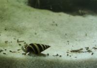 Helenki - na plagę ślimaków