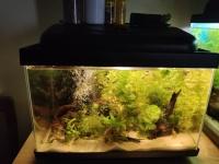 Akwarium Optiwhite - ponad 100 szt życia